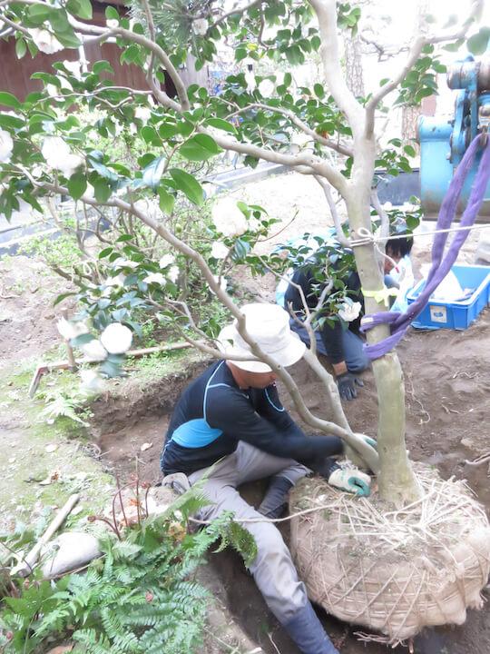 大切に育てられてきた木ですからお施主さんと相談し1本でも多く保存していく方針で行っています。