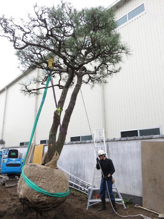 大きな木を移植するには季節、技術、費用、危険も伴いますが木と育んだ時間はお金では買えません。