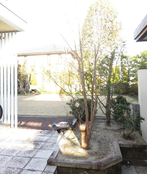 月と版築の庭5843